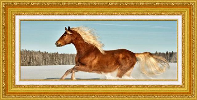 лошадка (640x325, 391Kb)