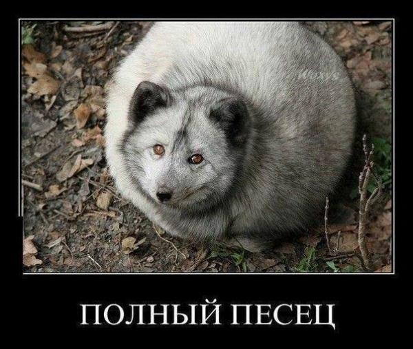 smeshnie_kartinki_138270041269 (600x507, 152Kb)