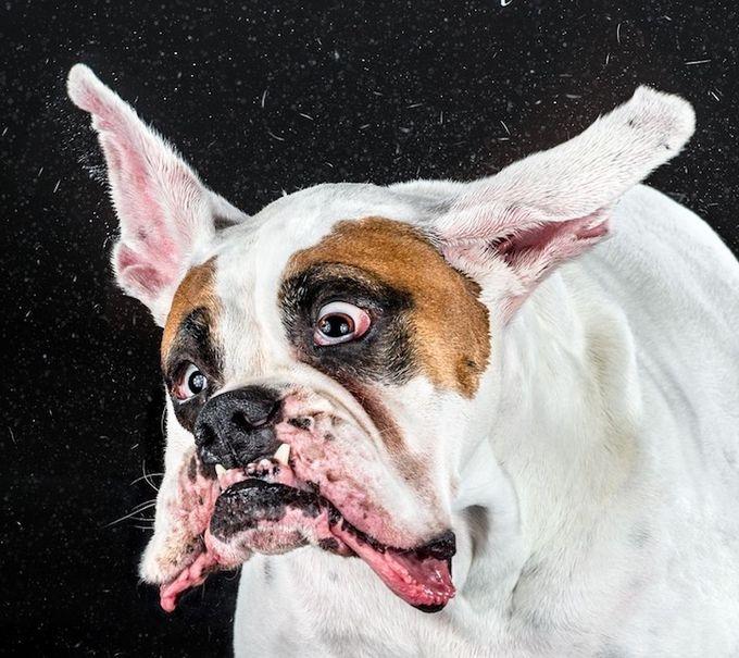 смешные фото собак 3 (680x605, 235Kb)