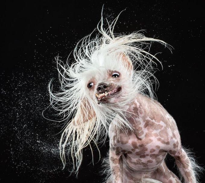 смешные фото собак 5 (680x605, 234Kb)