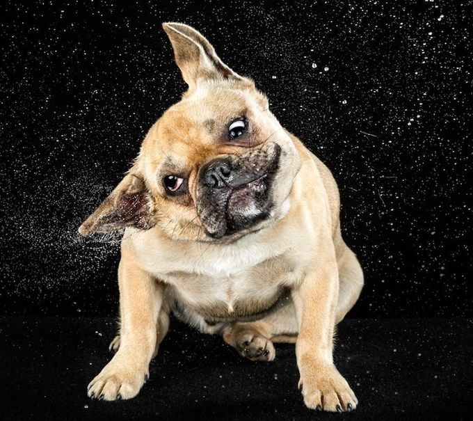 смешные фото собак 9 (680x605, 282Kb)