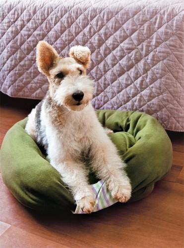 Как сшить лежанку для собаки. мастер-классы (13) (371x500, 193Kb)