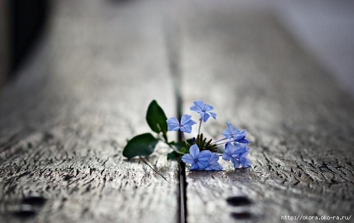flowers-macro-photo-flower-leaves-petals-hd-wallpaper-23956 (700x440, 211Kb)