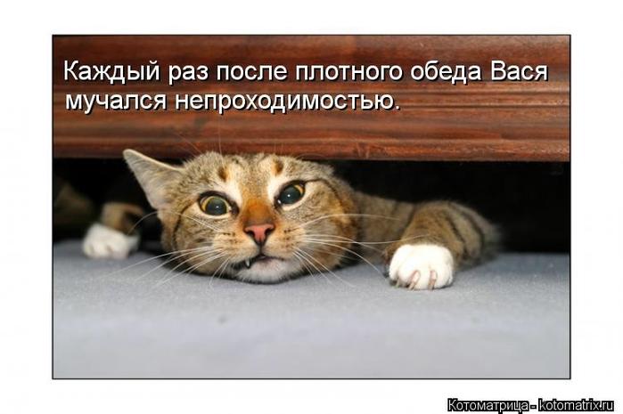 kotomatritsa_3_ (700x465, 152Kb)