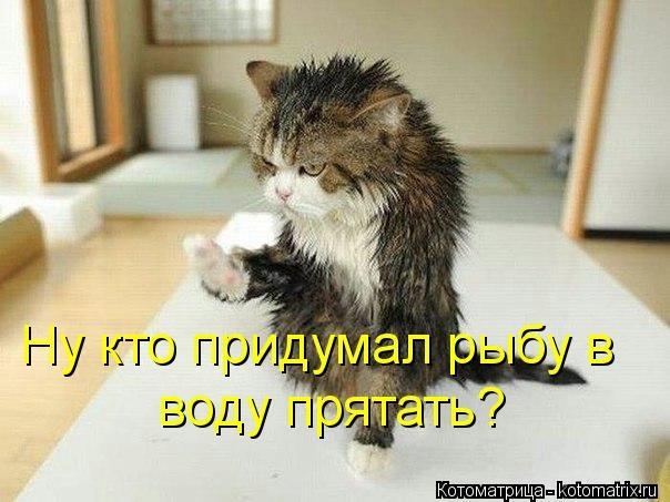 kotomatritsa_28 (604x453, 127Kb)