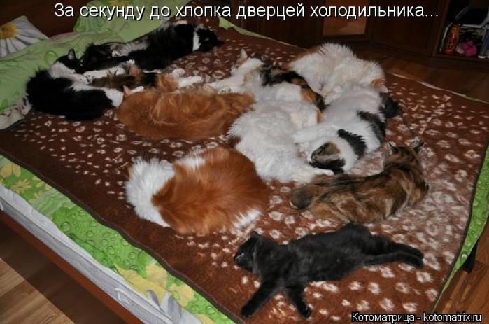 kotomatritsa_g (700x463, 238Kb)