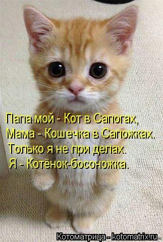 kotomatritsa_HE (323x480, 106Kb)