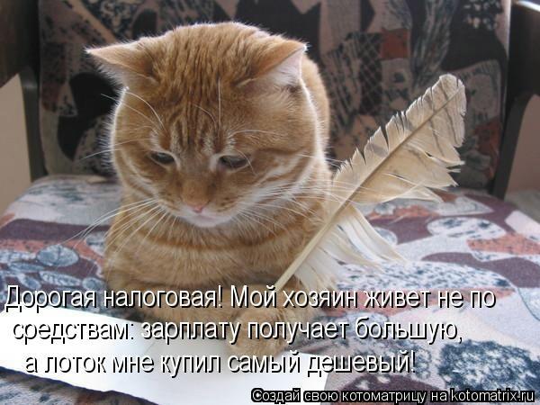 kotomatritsa_N (600x450, 142Kb)