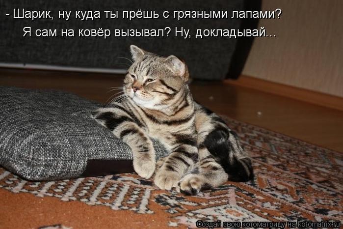 kotomatritsa_ST (700x466, 233Kb)