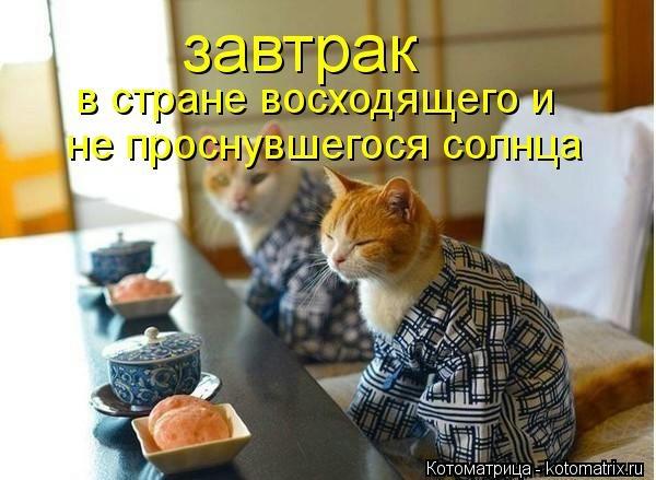 kotomatritsa_v47 (600x439, 133Kb)