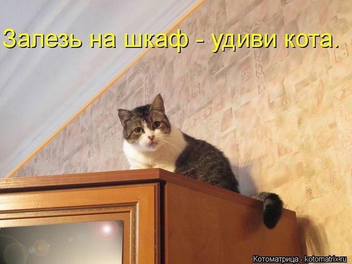 kotomatritsa_V (700x524, 227Kb)