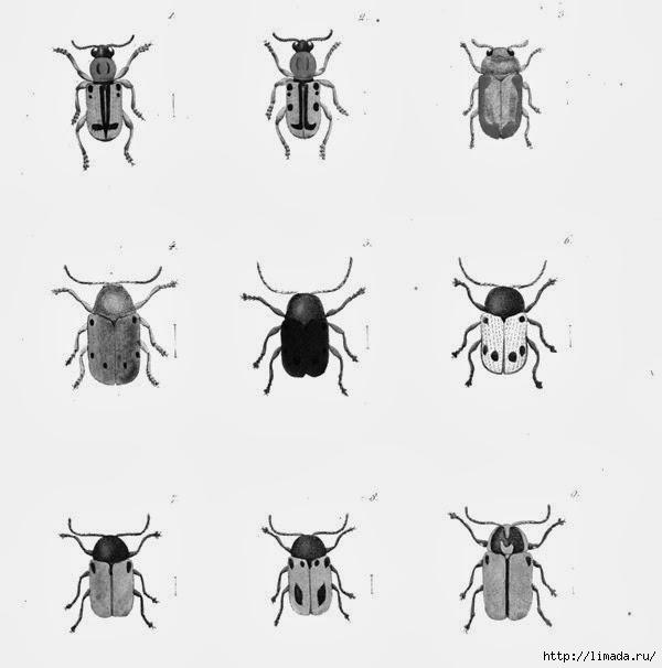Bugs3_thumb3 (600x606, 85Kb)