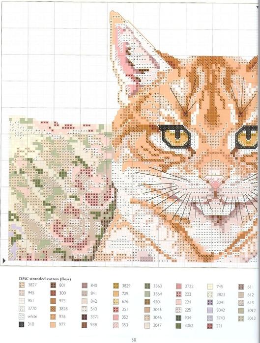 рыжий кот4 (529x700, 291Kb)