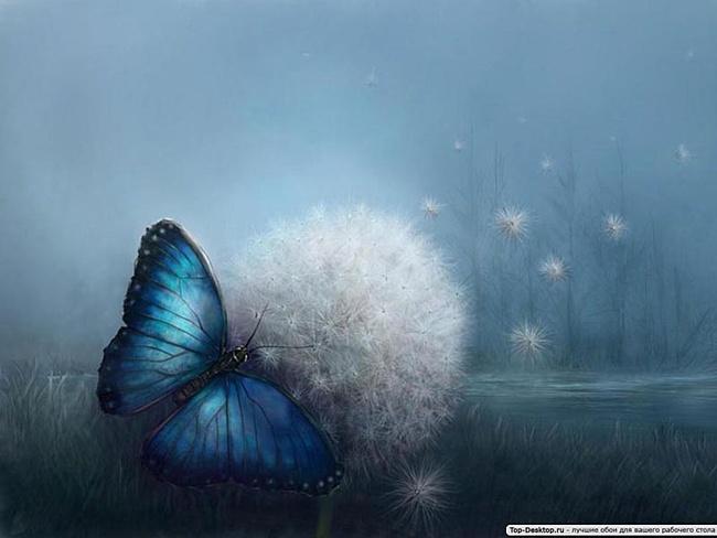 Бабочка (650x488, 79Kb)