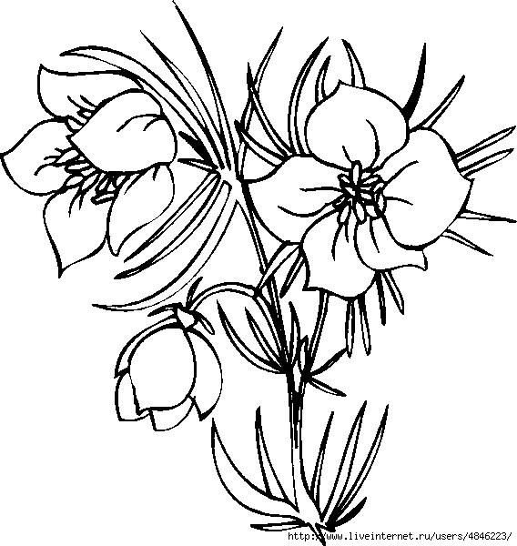 Blume160 (568x600, 183Kb)