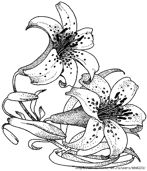 Feuerlilie20373 (517x600, 224Kb)