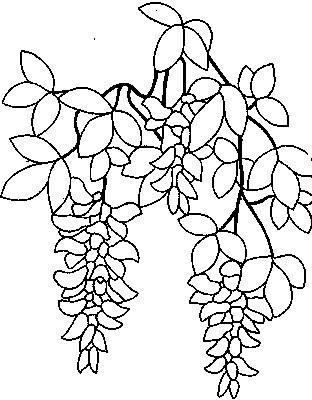 goldregen (312x400, 90Kb)