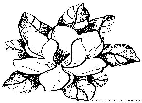 Magnolie (551x400, 147Kb)