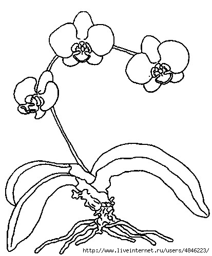 orchideenrispe (413x500, 97Kb)