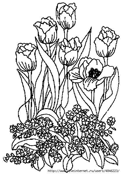 tulipe26 (416x600, 227Kb)