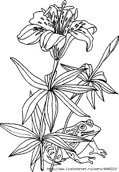 Лилии (416x600, 188Kb)
