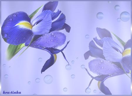 Ирис-синий (450x329, 156Kb)