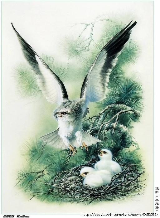 Мир птиц художника Зенг Ксяо 1 (513x700, 286Kb)