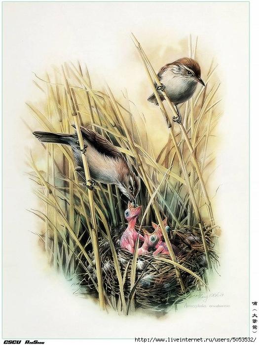 Мир птиц художника Зенг Ксяо 4 (525x700, 286Kb)