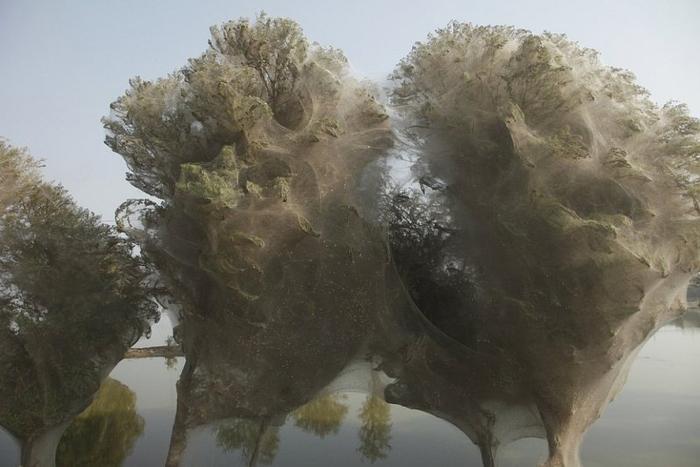 паучьи деревья 5 (700x467, 245Kb)