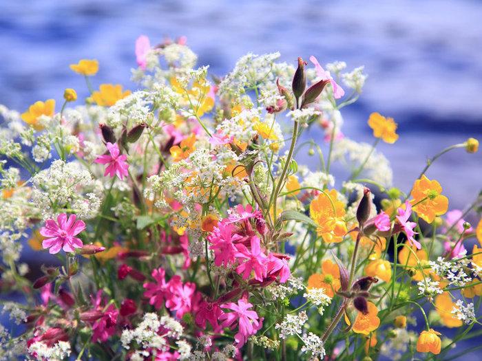 цветы2 (700x525, 139Kb)