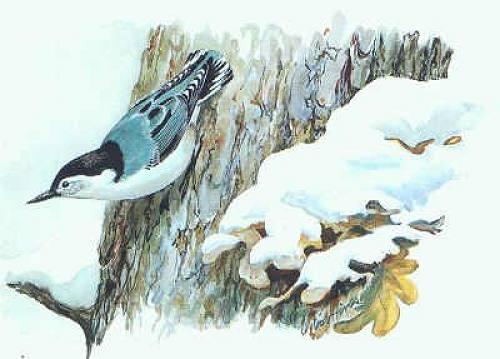 Картинки о поползне зимой