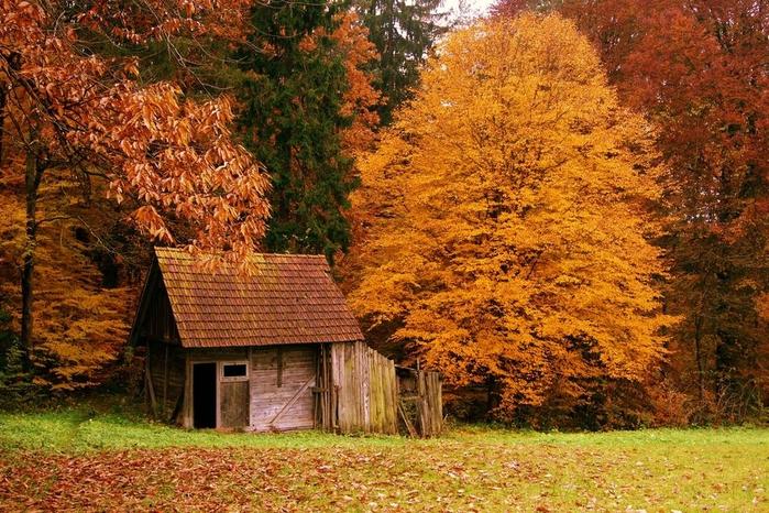 houseinwood01 (700x466, 361Kb)