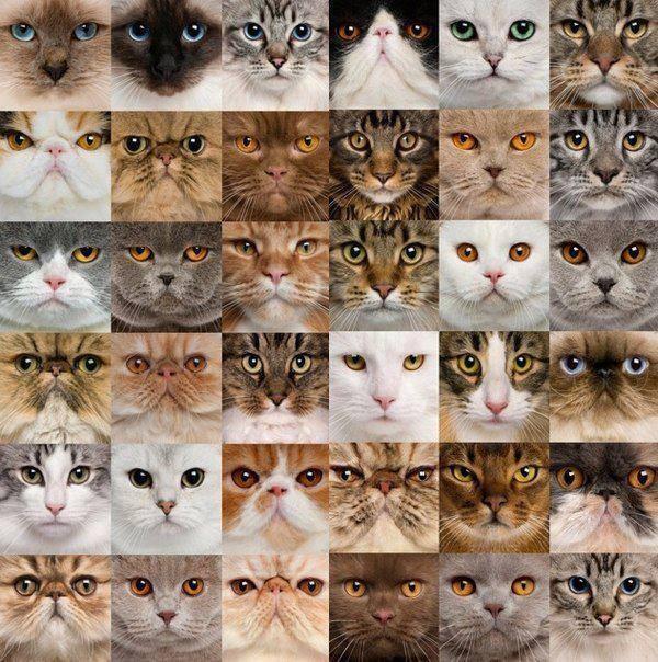 эмоции котов (600x604, 295Kb)