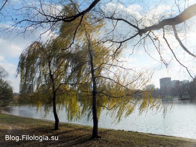 У водоема. Осенний пейзаж./3241858_priroda8 (660x495, 248Kb)