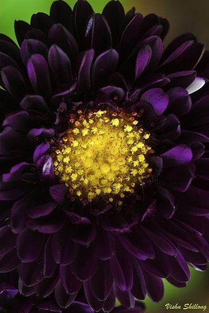 необыкновенной красоты цветы1а (429x640, 135Kb)