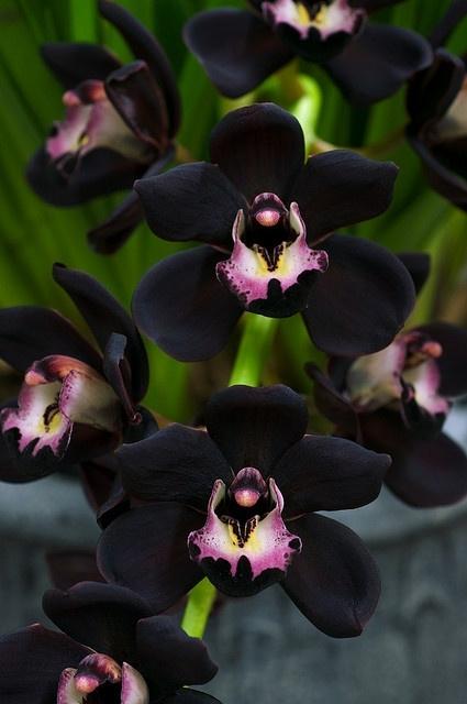 необыкновенной красоты цветы3с (425x640, 136Kb)