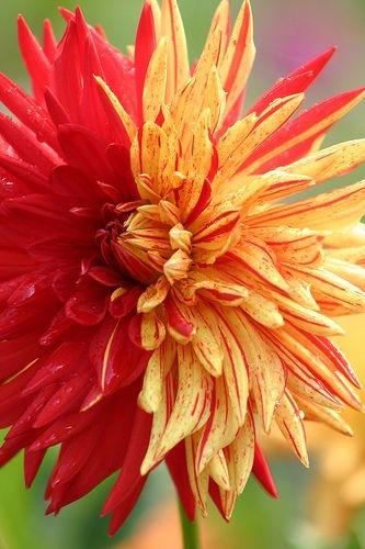 необыкновенной красоты цветы4 (333x500, 117Kb)