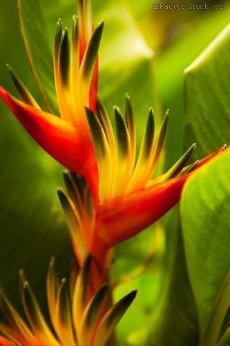 необыкновенной красоты цветы5 (333x500, 84Kb)