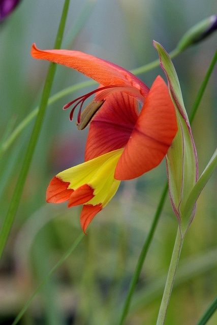 необыкновенной красоты цветы5и (427x640, 152Kb)