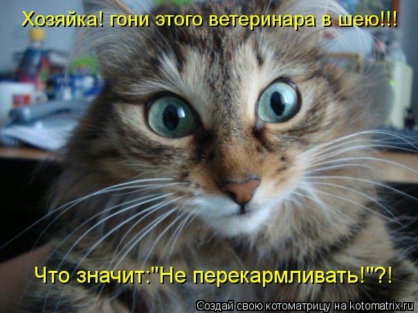kotomatritsa_d (604x453, 146Kb)