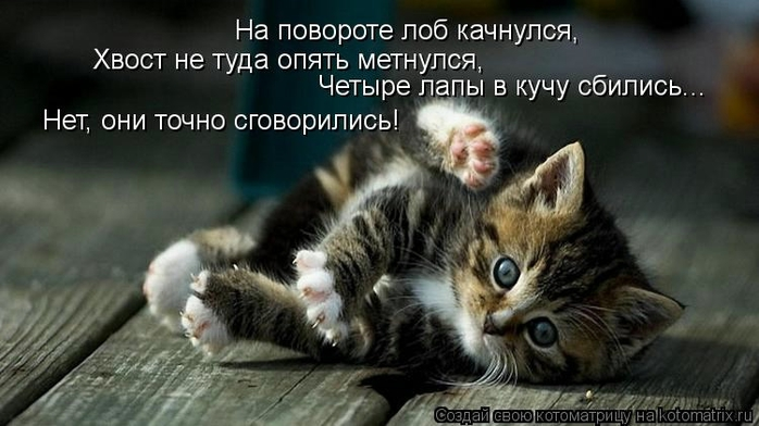kotomatritsa_Z (700x392, 179Kb)