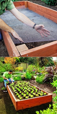 Line your raised bed with chicken wire to keep out gophers and moles! (200x400, 109Kb)