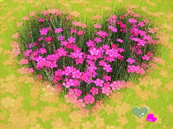Цветочная красота! сердце (600x450, 123Kb)