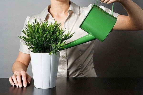 про растения (600x401, 134Kb)