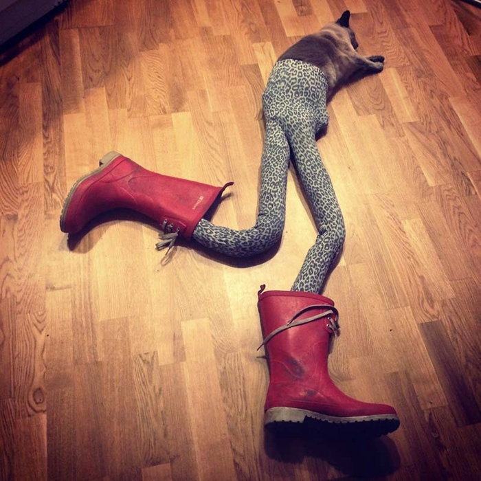 кошка в колготках фото 2 (700x700, 340Kb)
