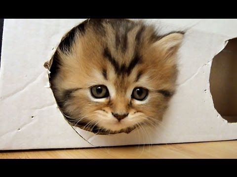 котята в коробке видео
