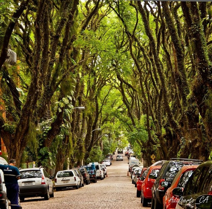 Руа Гонсалу де Карвальо фото 4 (700x690, 750Kb)