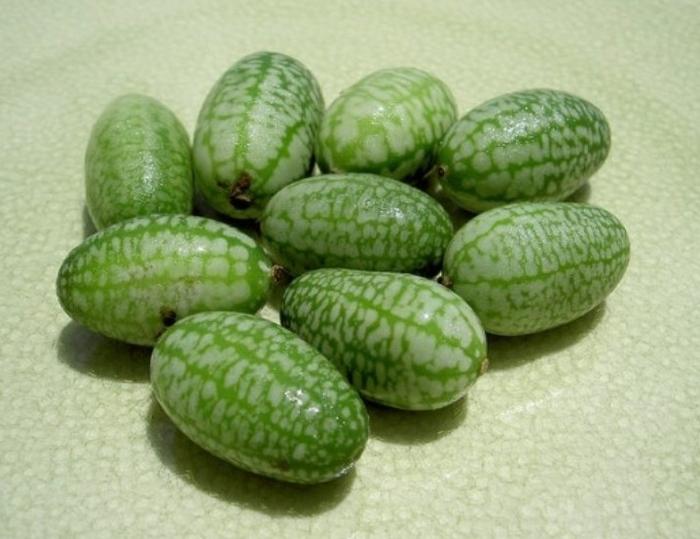 маленькие арбузы Pepquinos (700x539, 217Kb)
