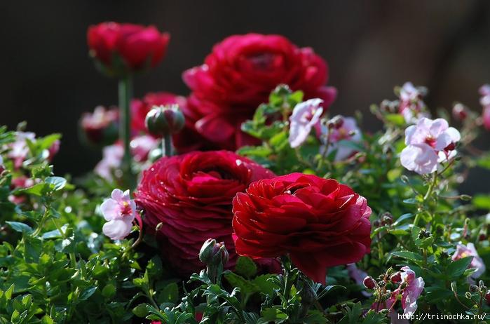 Дарю цветы настроения!