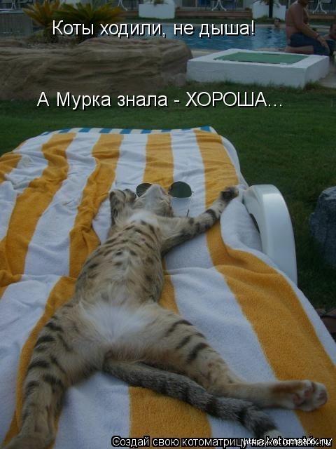 1382543460_106343335_large_kotomatritsa_3i (480x640, 154Kb)